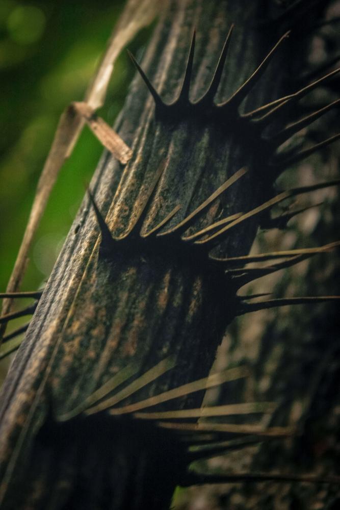 , Dżungla vs palmy