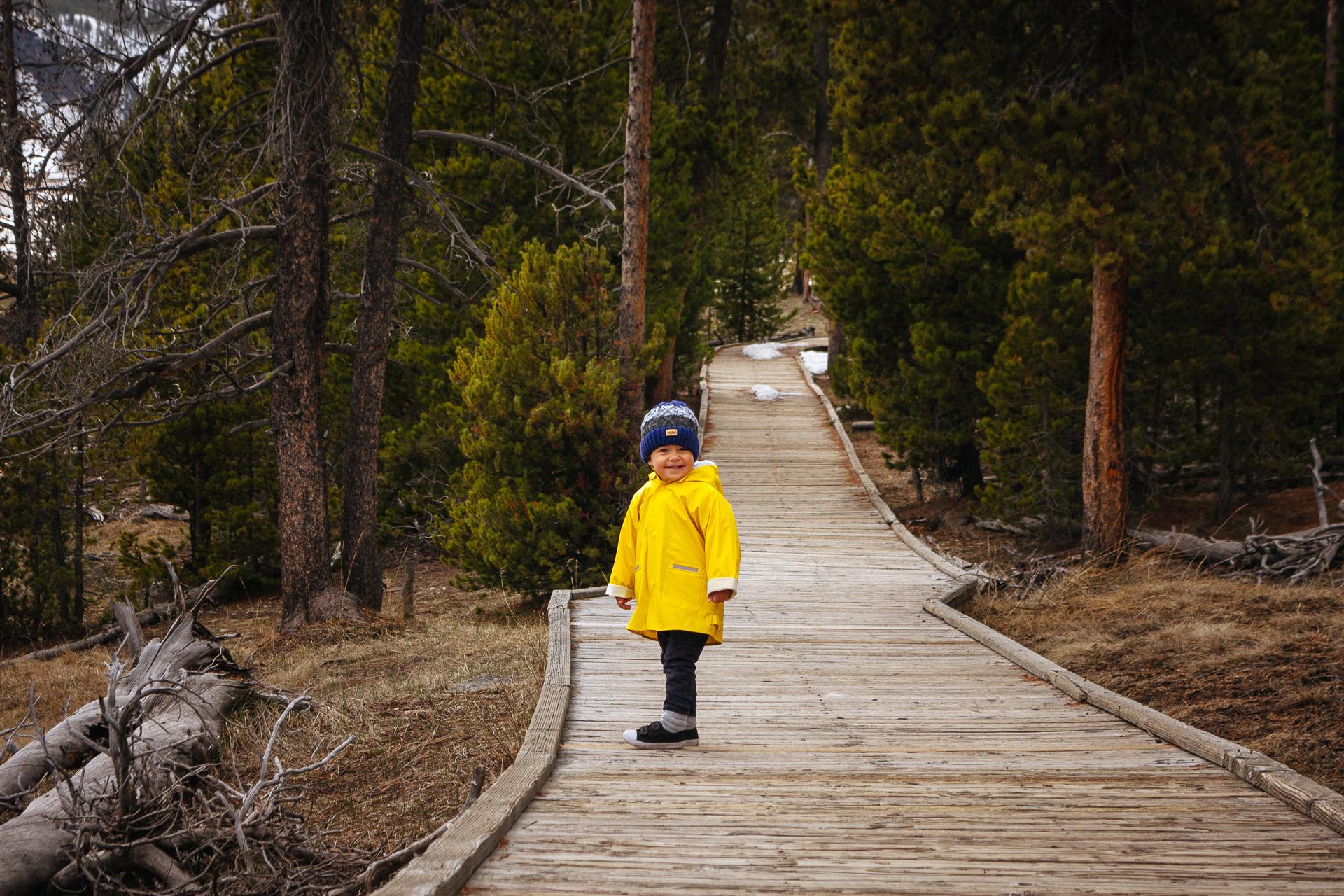yellowstone park, Yellowstone