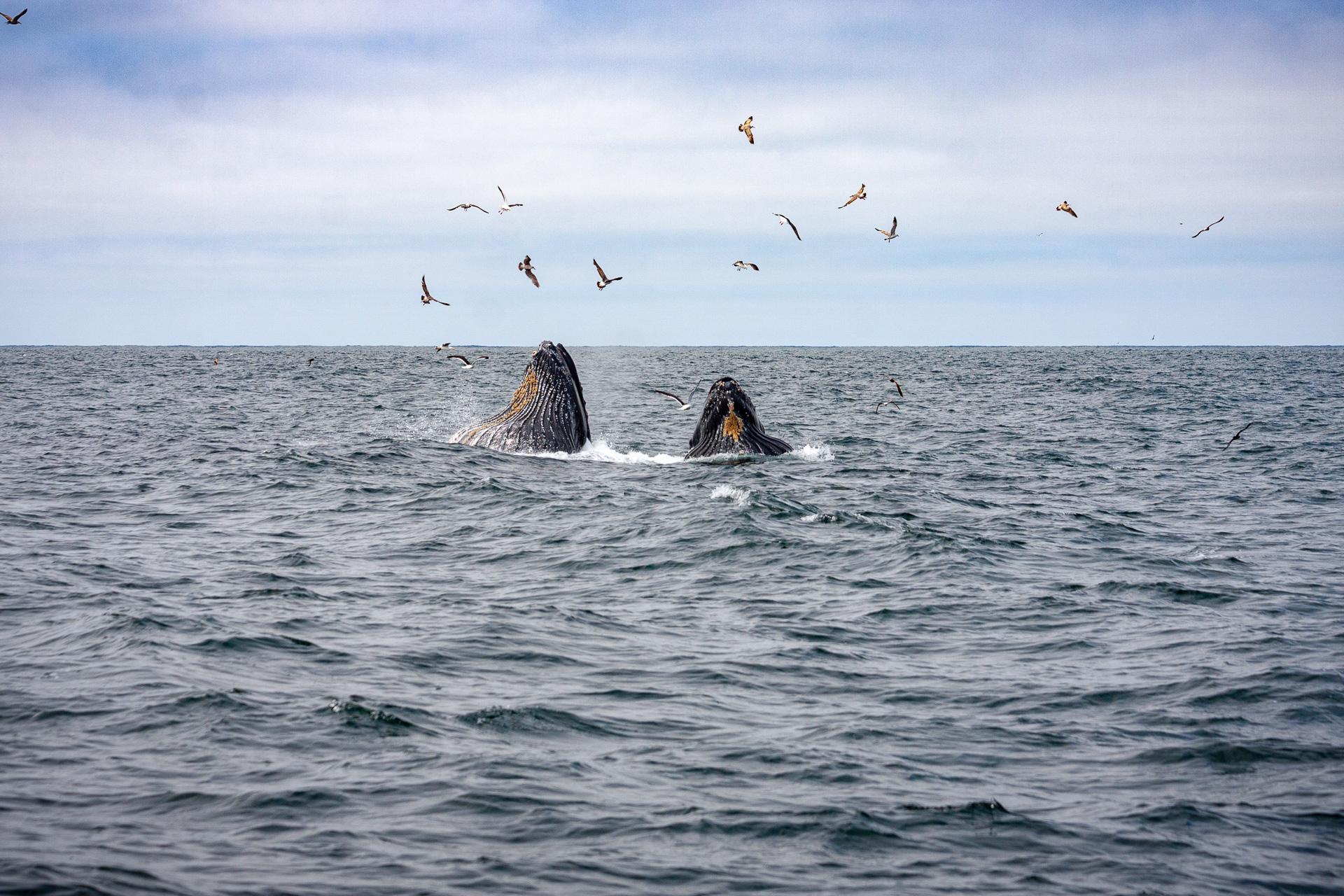 san francisco wieloryby